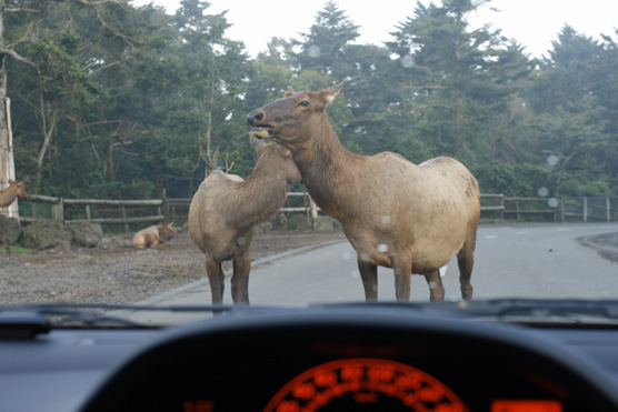 sight_safari